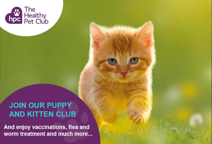 Healthy Pet Club kittens